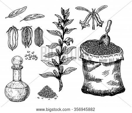 Bottle Of Sesame Oil With Plant And Seed. Sack Of Sesame Seeds. Vector Hand Drawn Illustration. Isol