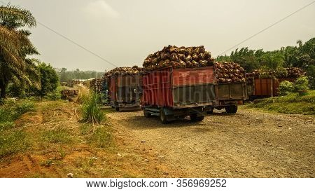 Trucks near palm oil factory in Bengkulu province, Sumatra, Indonesia. Slash and burn forest destruction is main environmental issue in Sumatra. Forest areas are illegaly converted to palm plantations