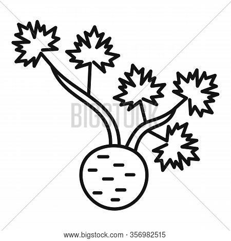 Fresh Root Celery Icon. Outline Fresh Root Celery Vector Icon For Web Design Isolated On White Backg