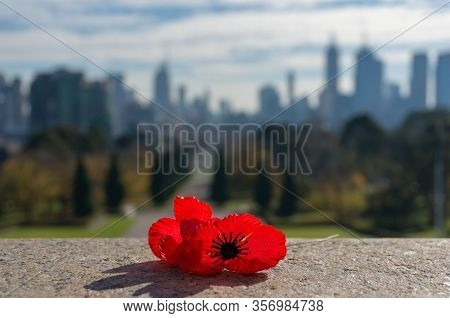 Close Up Of Red Poppy Flower With Urban Cityscape On The Background. Remembrance Day Concept. Melbou