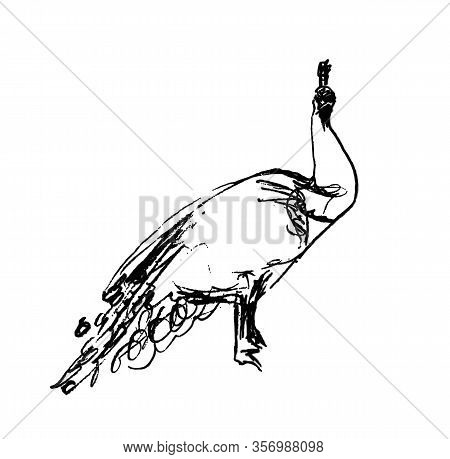 Vector Illustration, Isolated Male Peacock In Black And White Colors, Outline Original Hand Painted