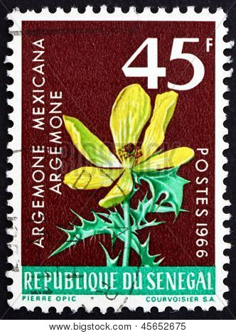 Postage Stamp Senegal 1966 Mexican Poppy, Flowering Plant