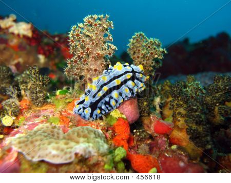 Nudibranch In A Soft Coral Forest