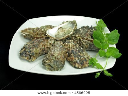 Fresh And Juicy Oysters