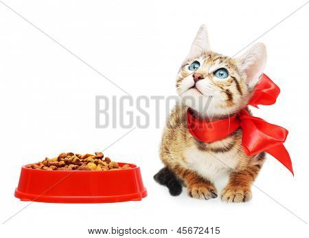 Kitten looking up near dry food in a red bowl.