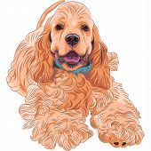 close-up portrait of a cute sporting dog breed American Cocker Spaniel smiling poster