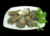 a plate of fresh oysters garnished with mint herb on black background. poster