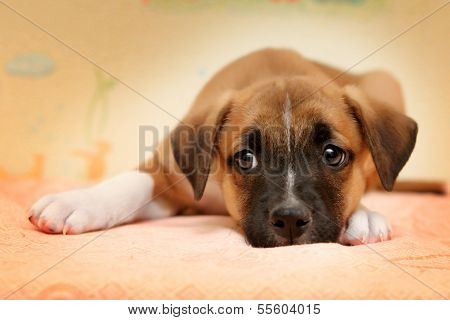 Cute red dog Laying in Bed on biege Sheets