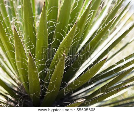 Cactus Detail Background
