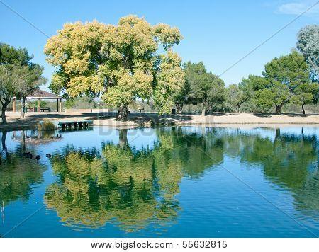 Tree reflecting off lake