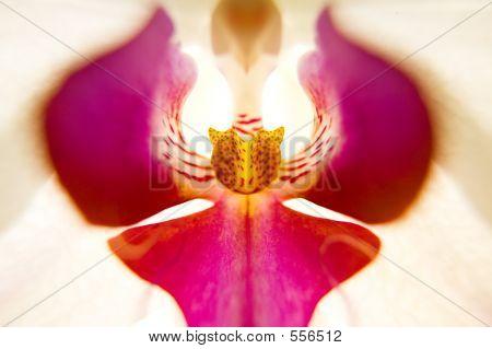 Orchid Interior