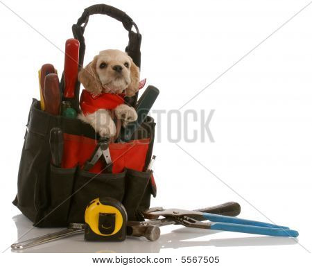 american cocker spaniel puppy sitting inside tool kit poster