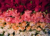 roses, poster