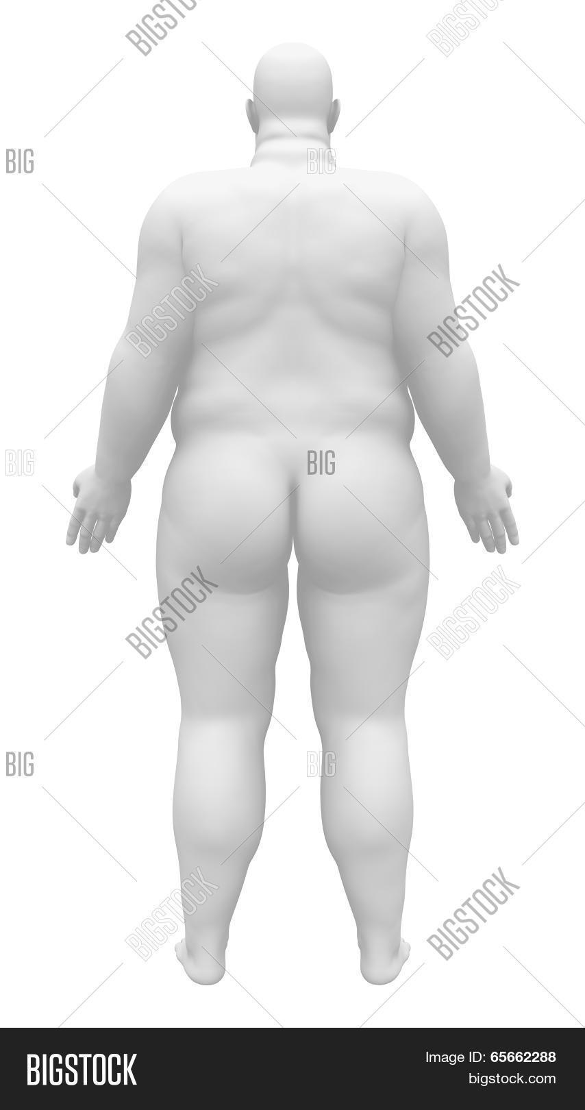 Obese Anatomy Male Figure - Back Image & Photo   Bigstock