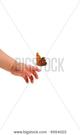 Baby And A Butterfly