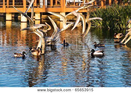 Ducks Gather In A Park Pond