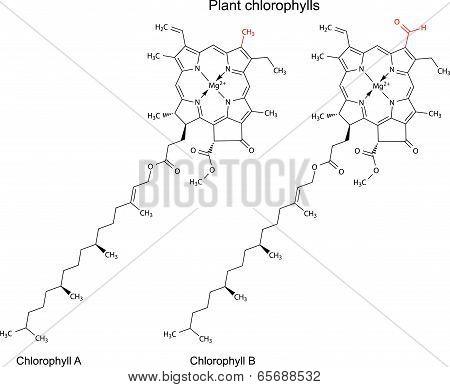 Structural Chemical Formulas Of Plant Pigments Chlorophylls