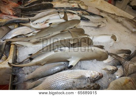 TEKKA SEAFOOD MARKET, SINGAPORE - MAY 27 2014: Sharks at fish market. Dead sharks are sold at market for their fins, used in shark fin soup, a traditional Chinese dish.