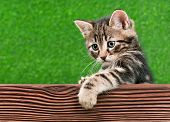 Cute little kitten with wooden plank on green background  poster