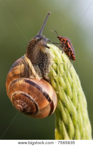 Snail And Chinch