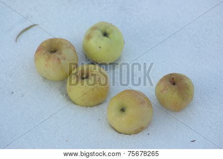Five apples on snow