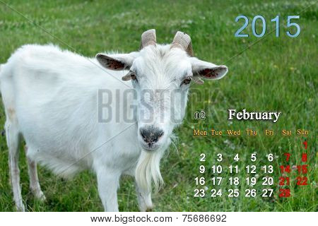 beautiful calendar for February of 2015 year with white goat poster