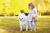 Lifestyle autumn photo little girl and Samoyed dog walking in the park poster