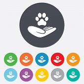 Shelter pets sign icon. Hand holds paw symbol. Animal protection. Round colourful 11 buttons. Vector poster