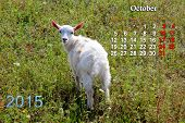 beautiful calendar for October of 2015 year with little goat poster