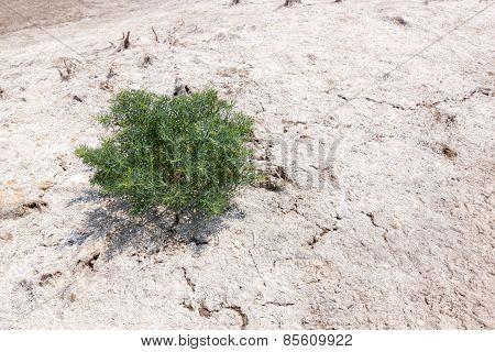 Single Tree On A Salt White Land
