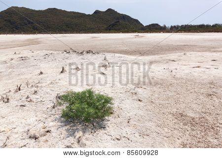 Single Tree On A White Ground