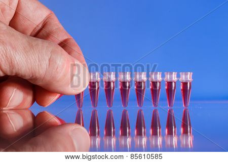 PCR strip test tubes and micropipette in genetics laboratory