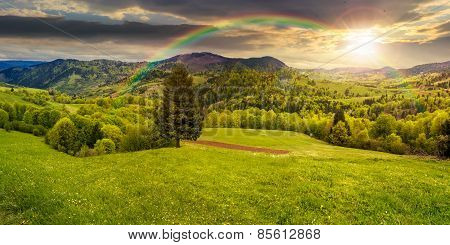 Coniferous Tree In A Panoramic Valley At Sunset
