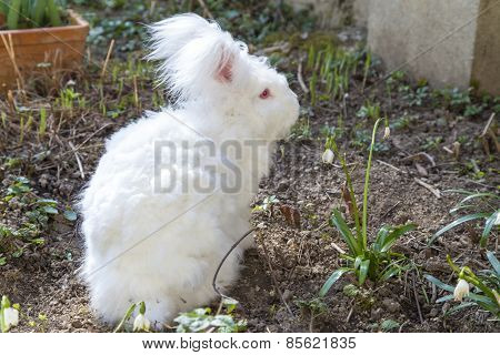Cute fluffy angora rabbit sitting on grass and eating herbs