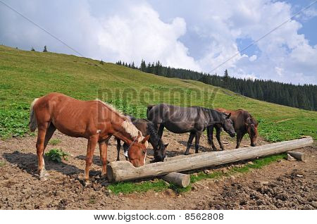 Horses at a feeding trough with salt in a bright summer mountain landscape with the dark blue sky in clouds. poster