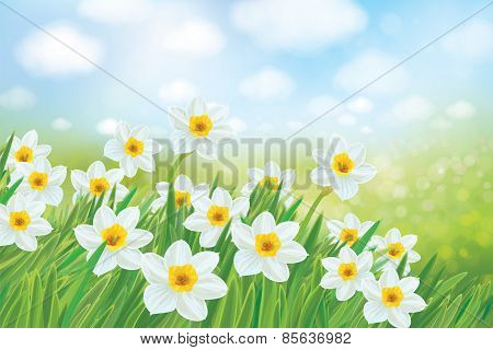 Vector Spring Nature Background, Daffodil Flowers.