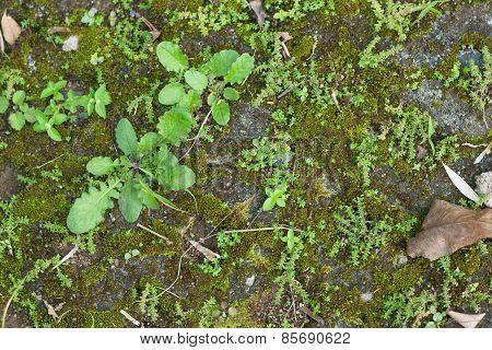 Fresh Green Grasses On Ground In Cement Block