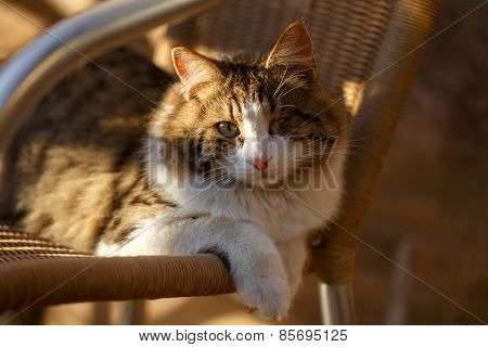 One-eyed Cat In Sunlight
