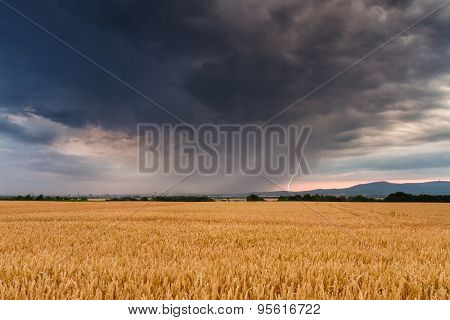 Thunderstorm Over A Wheat Field