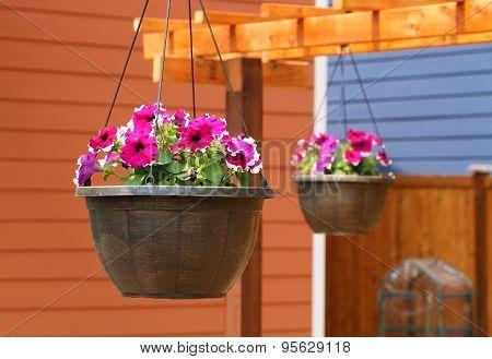 Hanging flower baskets hanging on trellis
