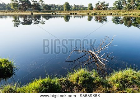 Marshy Area With A Branch In The  Water