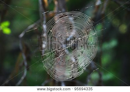 The image of a spider web