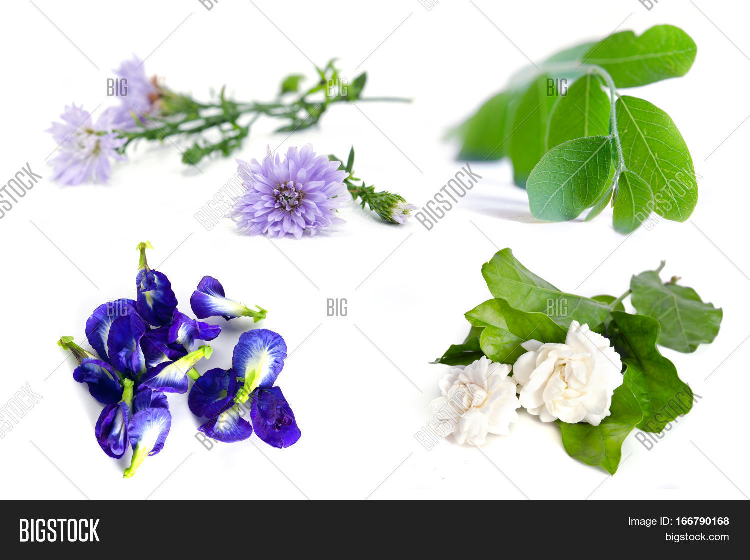Group plant flower image photo free trial bigstock group of plant and flower moringa plant leaf jasmine flower butterfly pea blue pea and izmirmasajfo