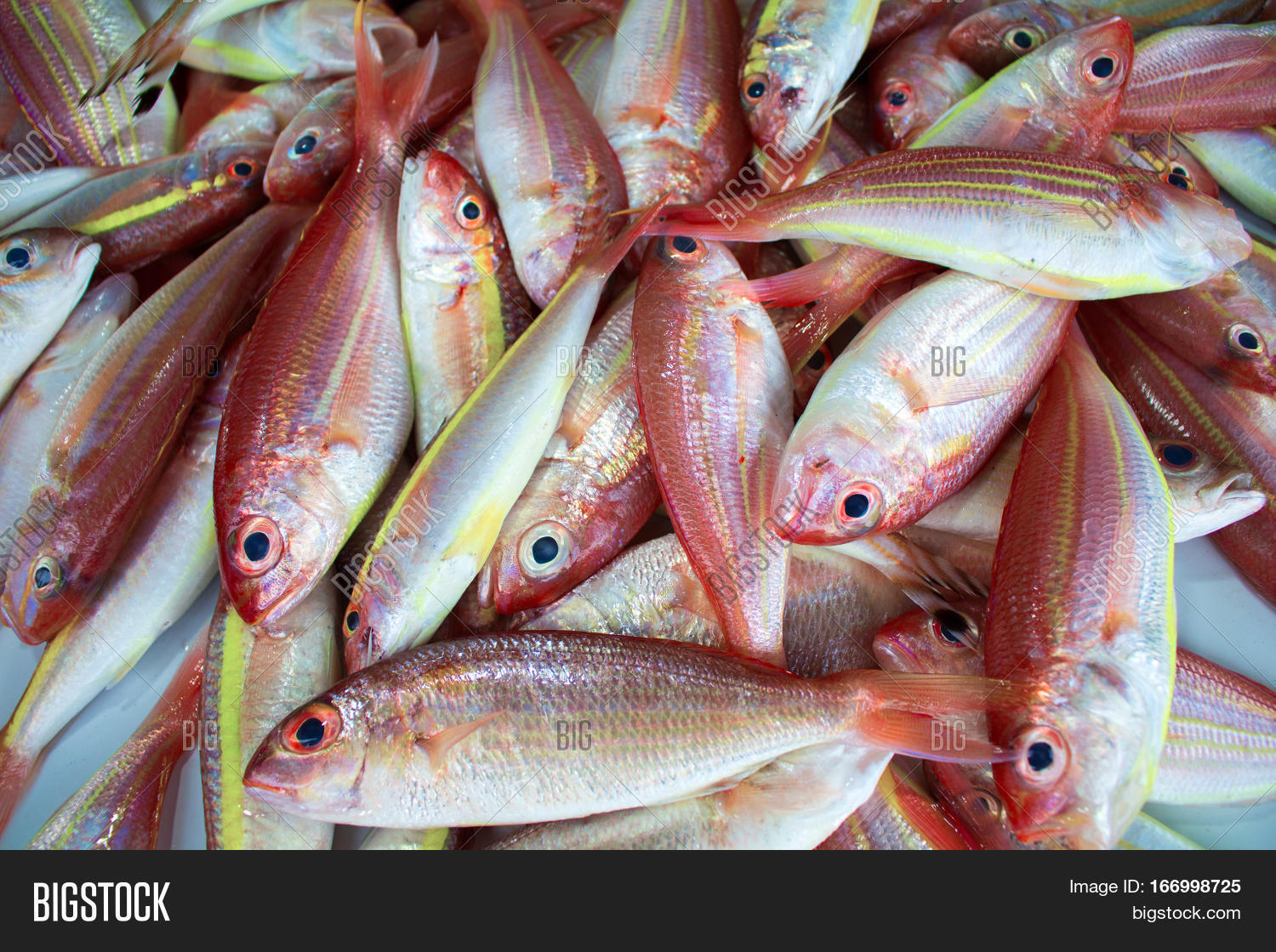 Red Tropical Fishes On Image & Photo (Free Trial)   Bigstock