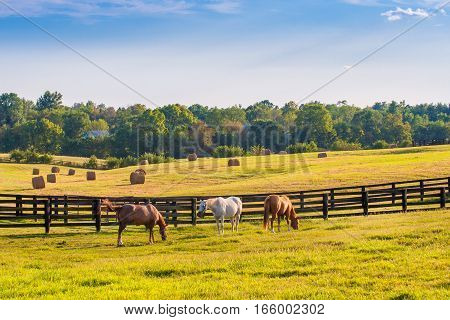 Horses at horse farm at golden hour. Country summer landscape.