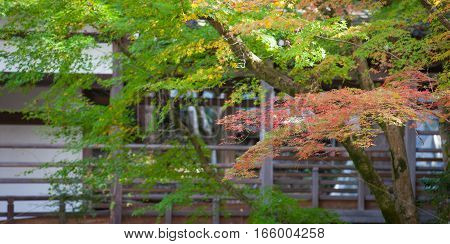 Autumn leaves and Autumn tree in japanese garden