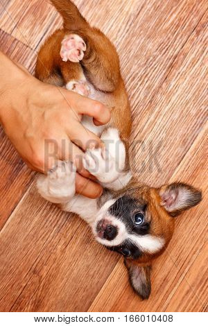 Puppy plays with the owner. Pets need our support and care. The owner search.