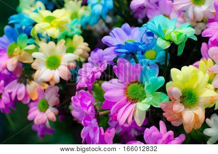 Multicolored flower . Range of Happy Joyful Multi Colours. Can use for Background Texture or Wallpaper