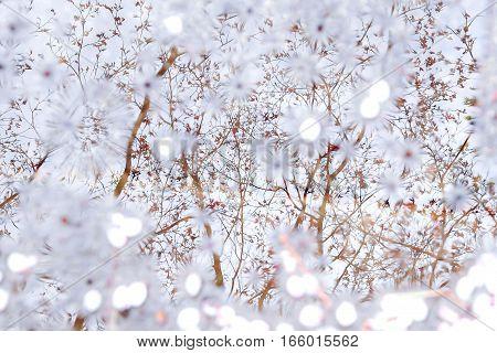 Blooming tree. Beautiful nature in spring. Ukraine.