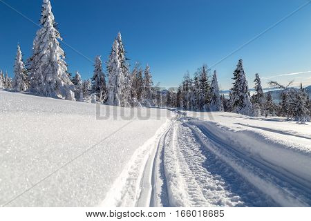 Winter snow-covered trees in the Ural mountains.
